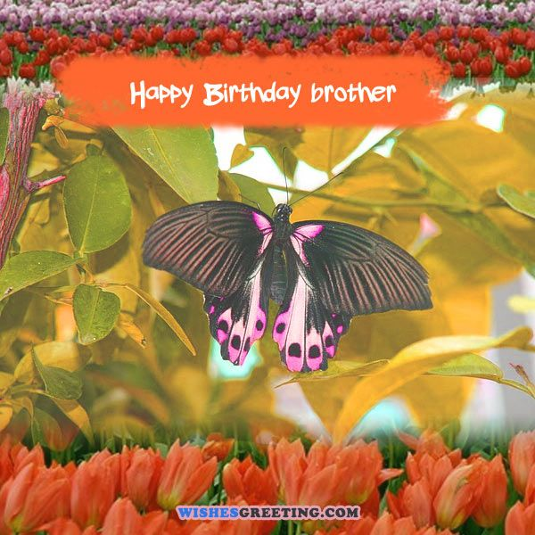 happy-birthday-images-cards-pictures18