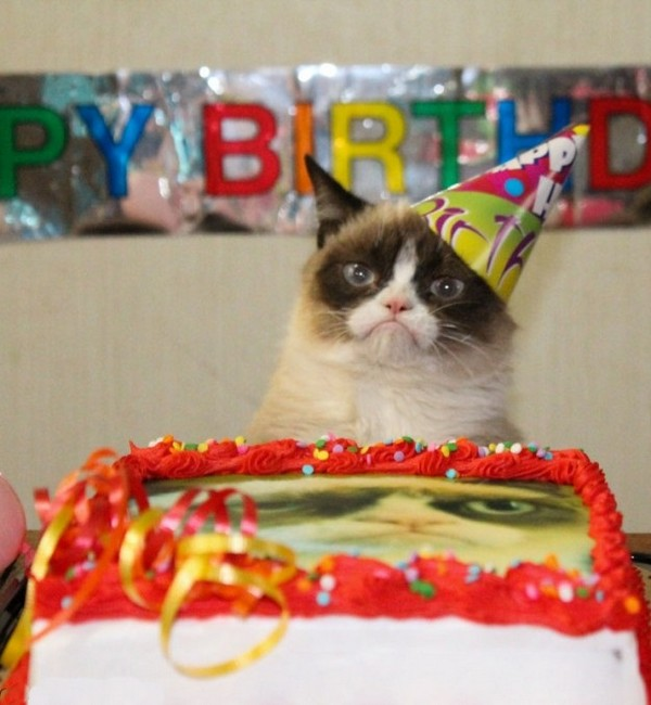 105 Birthday Wishes For Cats