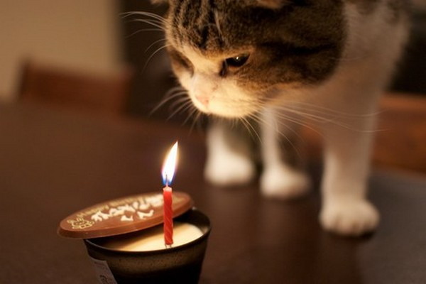 happy-birthday-cat05