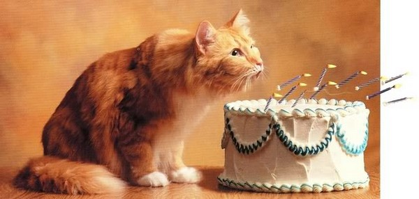 happy-birthday-cat06