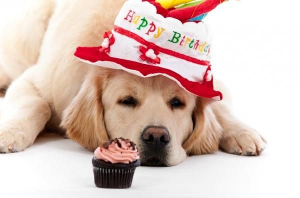 happy-birthday-dog