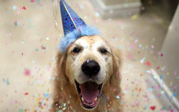 The 45 Birthday Wishes for Dogs | WishesGreeting - photo#6