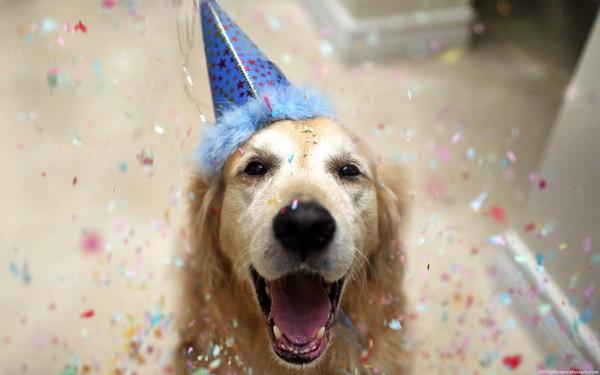Happy Birthday Cake For A Dog