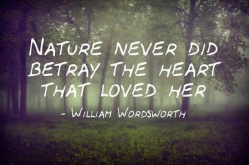 Top 60 Nature Quotes Wishesgreeting