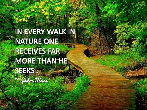 nature quotes walk inspirational sayings muir peace receives seeks far every than he memes quote beauty walking camping healing yourself