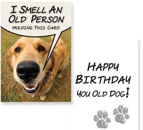 Birthday Wishes For A Dog Lover5