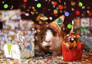 happy_birthday_neighbor8